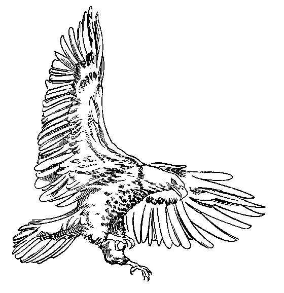 White-tailed Eagle clipart #17, Download drawings