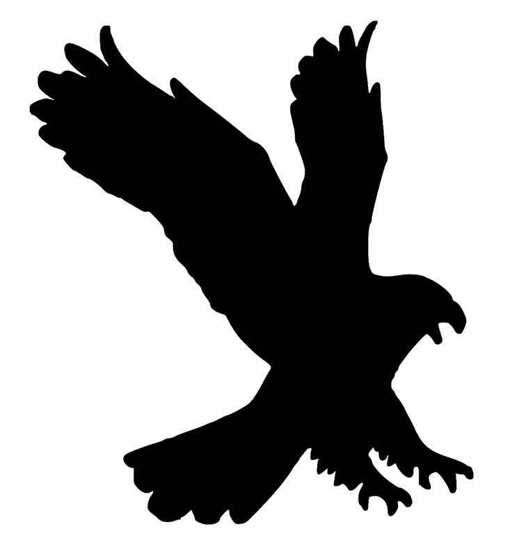 White-tailed Eagle svg #8, Download drawings