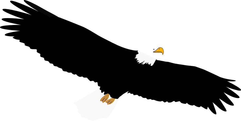White-tailed Eagle svg #12, Download drawings