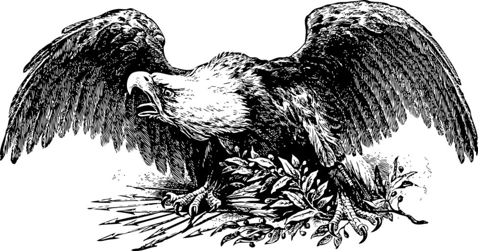 White-tailed Eagle svg #7, Download drawings