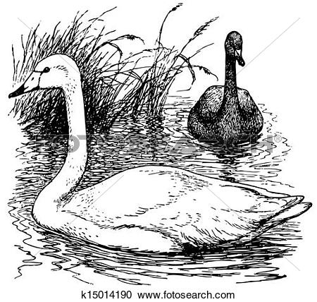 Whooper Swan clipart #8, Download drawings