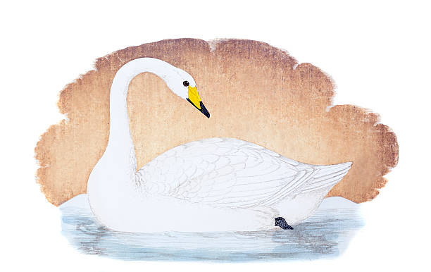 Whooper Swan clipart #6, Download drawings
