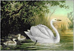 Whooper Swan clipart #16, Download drawings