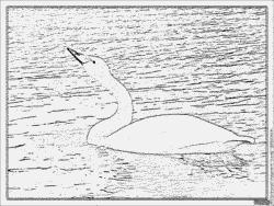 Whooper Swan coloring #9, Download drawings