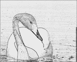 Whooper Swan coloring #11, Download drawings