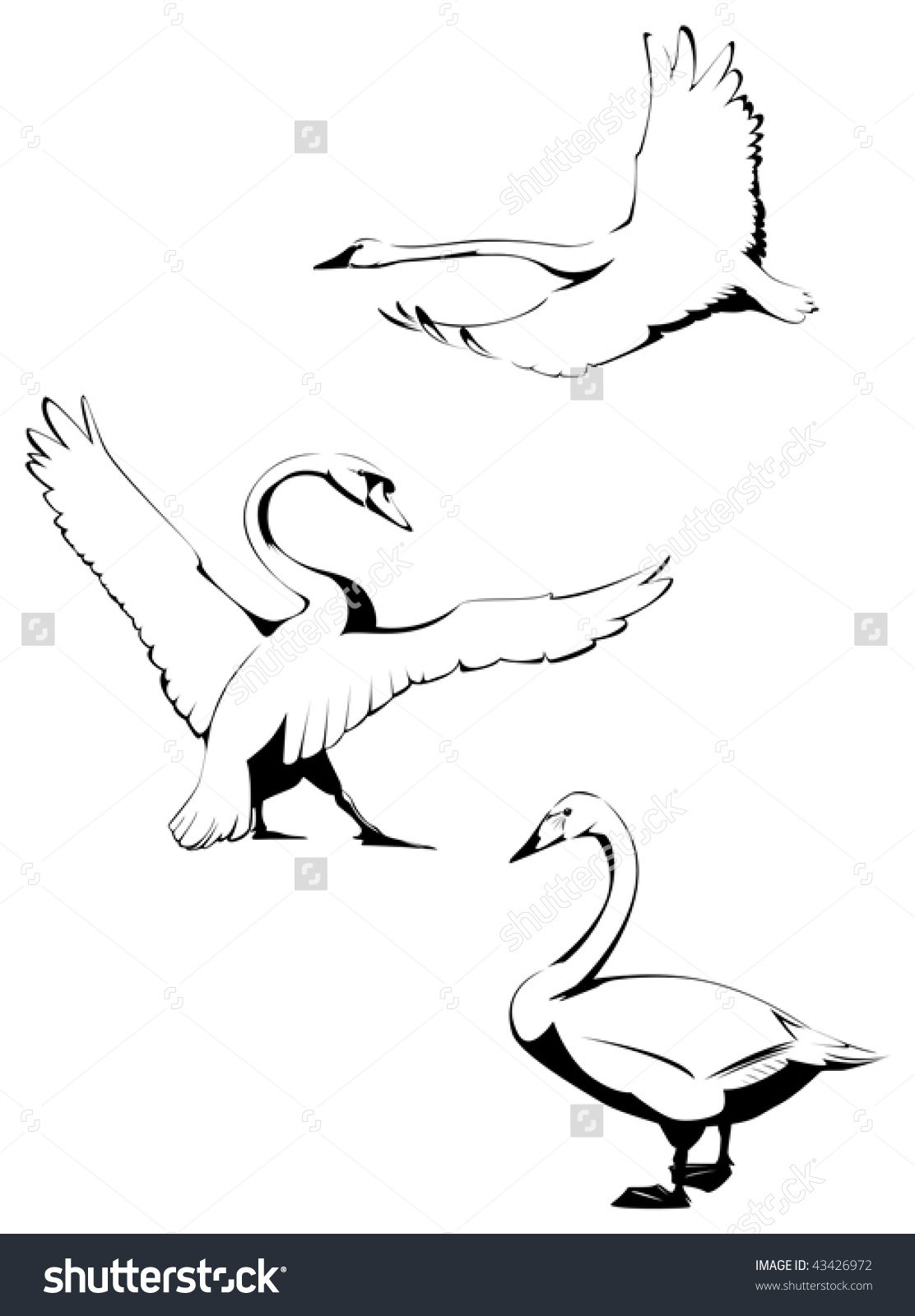 Whooper Swan coloring #17, Download drawings