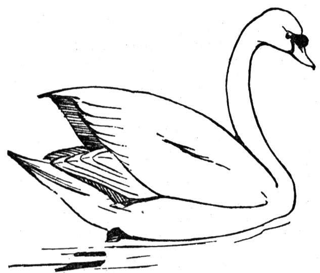 Whooper Swan coloring #1, Download drawings
