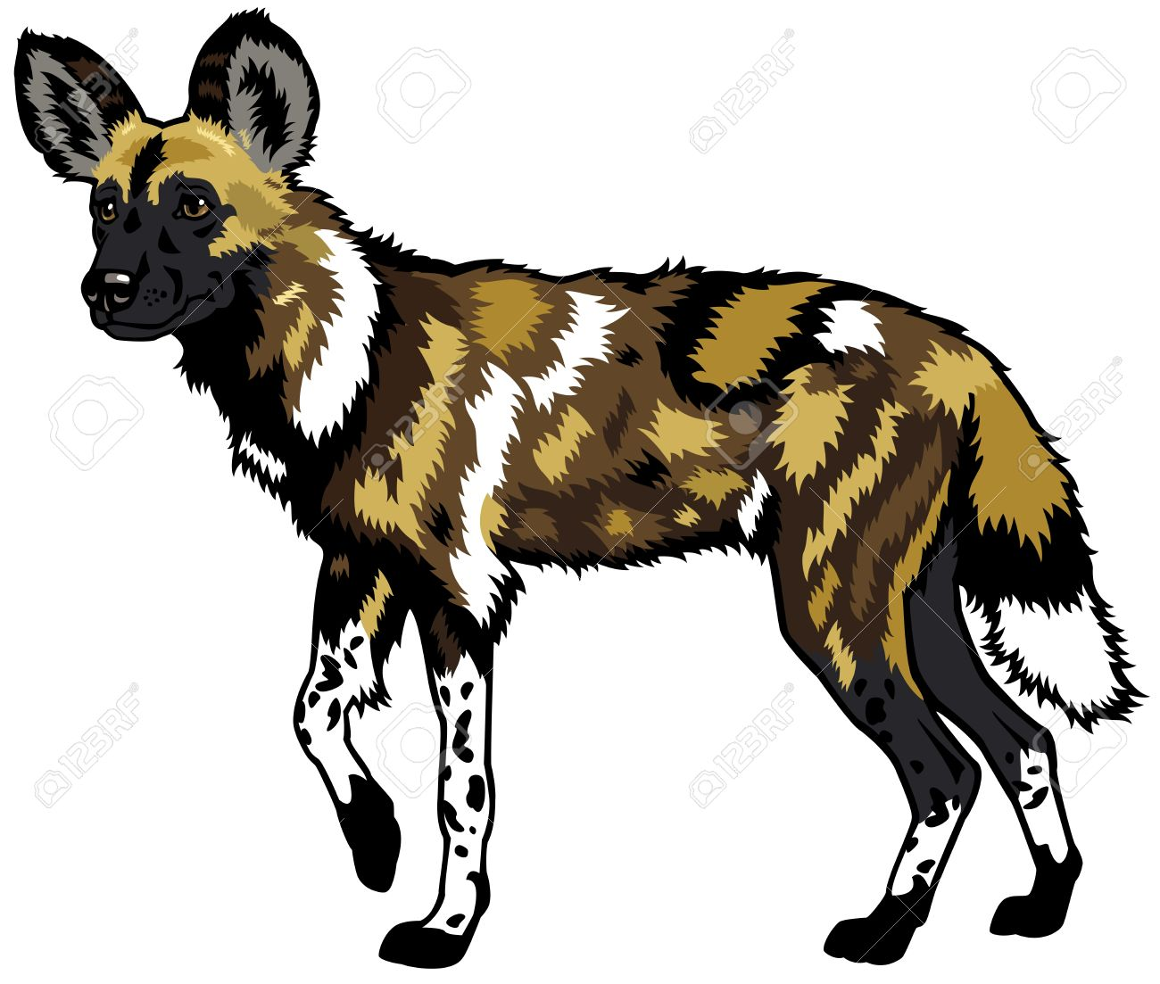 Wild Dog clipart #4, Download drawings