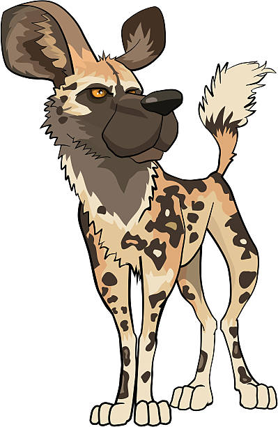 Wild Dog clipart #14, Download drawings