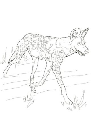 Wild Dog coloring #13, Download drawings