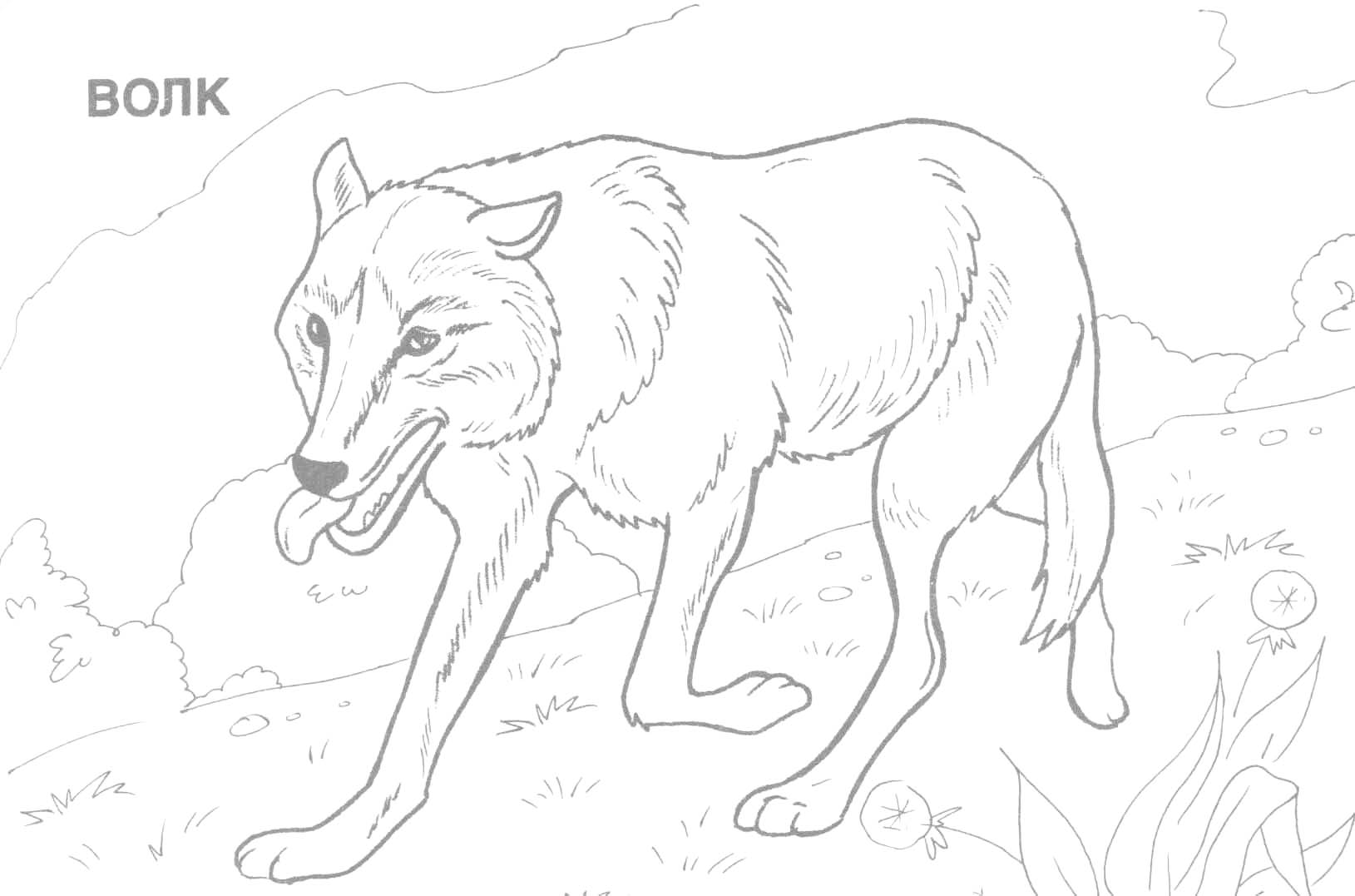Wild Dog coloring #19, Download drawings