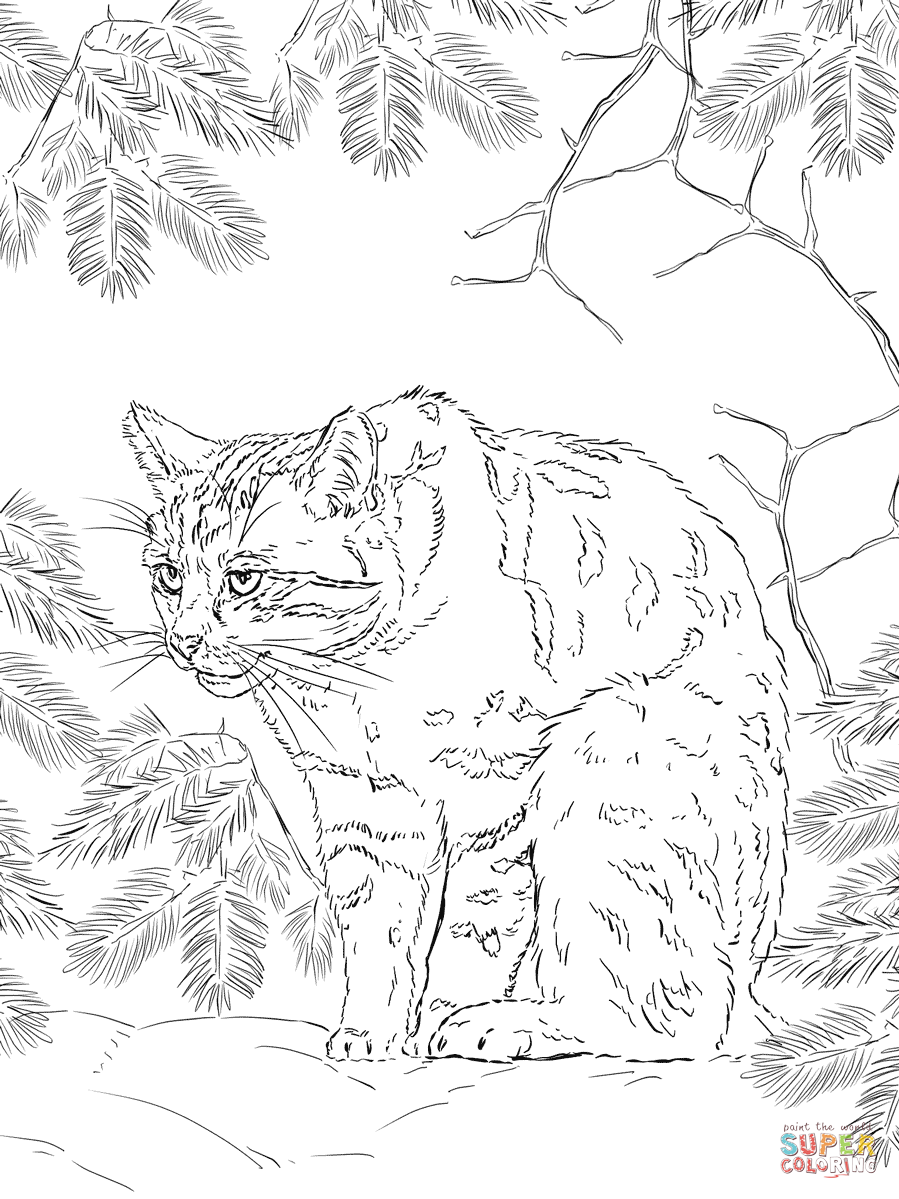Wildcat coloring #17, Download drawings