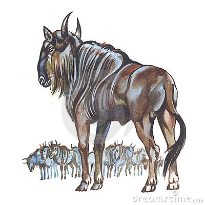 Wildebeest clipart #7, Download drawings