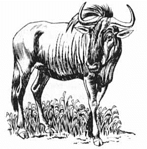 Wildebeest clipart #6, Download drawings
