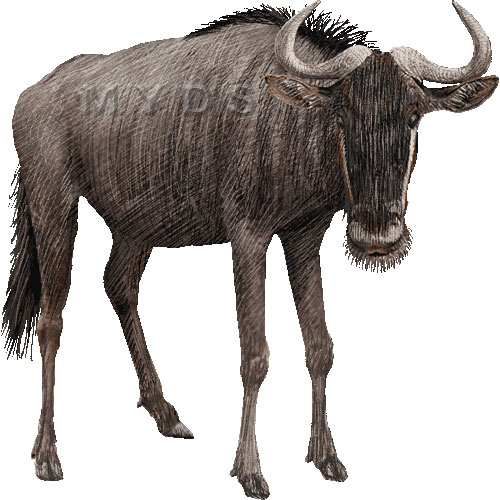 Wildebeest clipart #10, Download drawings