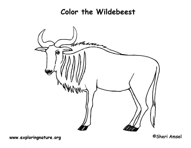 Wildebeest coloring #20, Download drawings