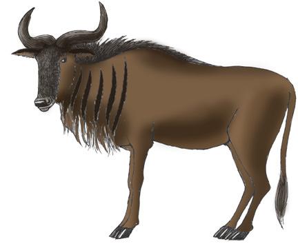 Wildebeest coloring #14, Download drawings