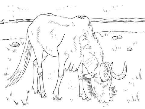 Wildebeest coloring #15, Download drawings