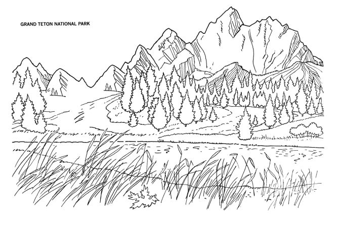 Wilderness coloring #13, Download drawings