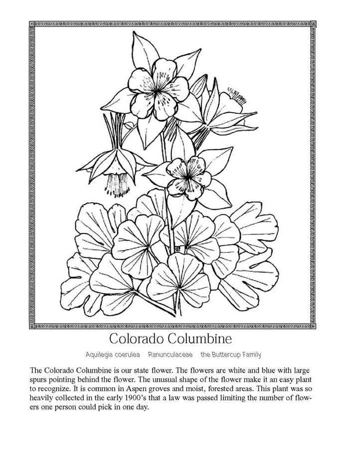 Wildflower coloring #20, Download drawings