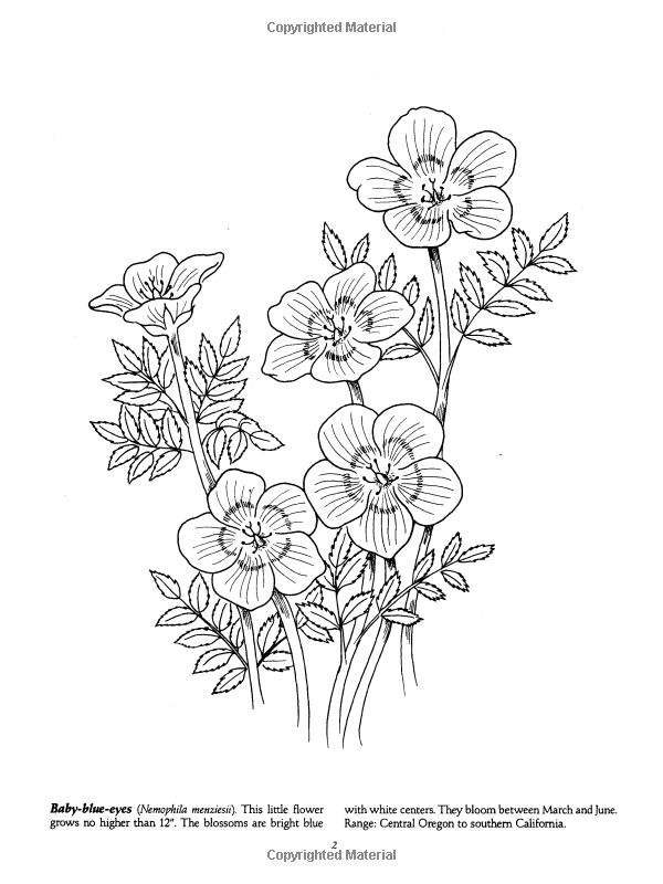 Wildflower coloring #2, Download drawings