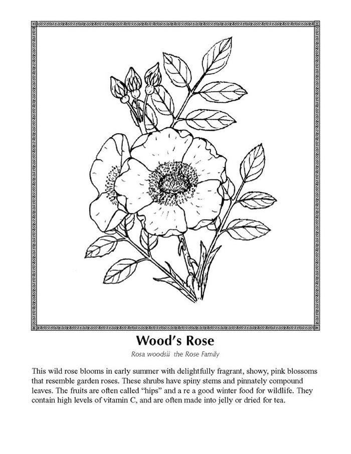 Wildflower coloring #8, Download drawings