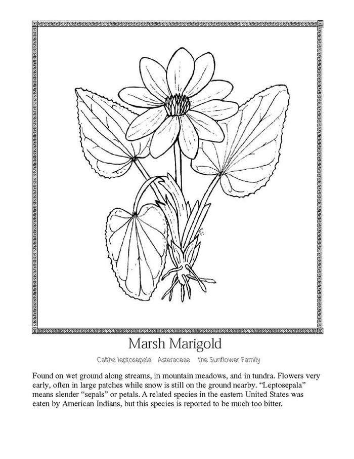 Wildflower coloring #9, Download drawings