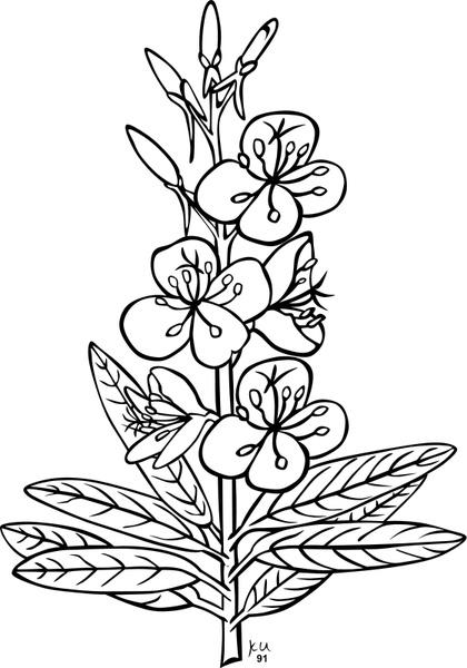 Wildflower svg #8, Download drawings