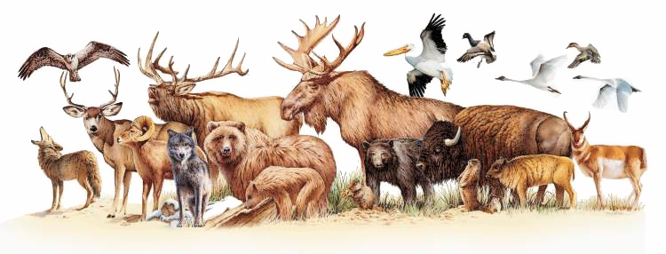 Wildlife clipart #16, Download drawings