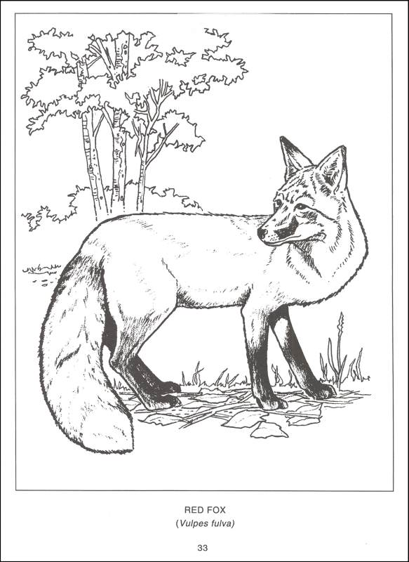Wildlife coloring #8, Download drawings