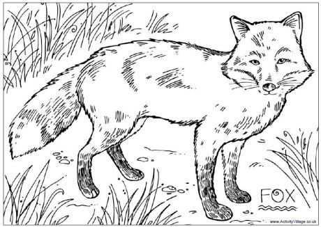 Wildlife coloring #6, Download drawings