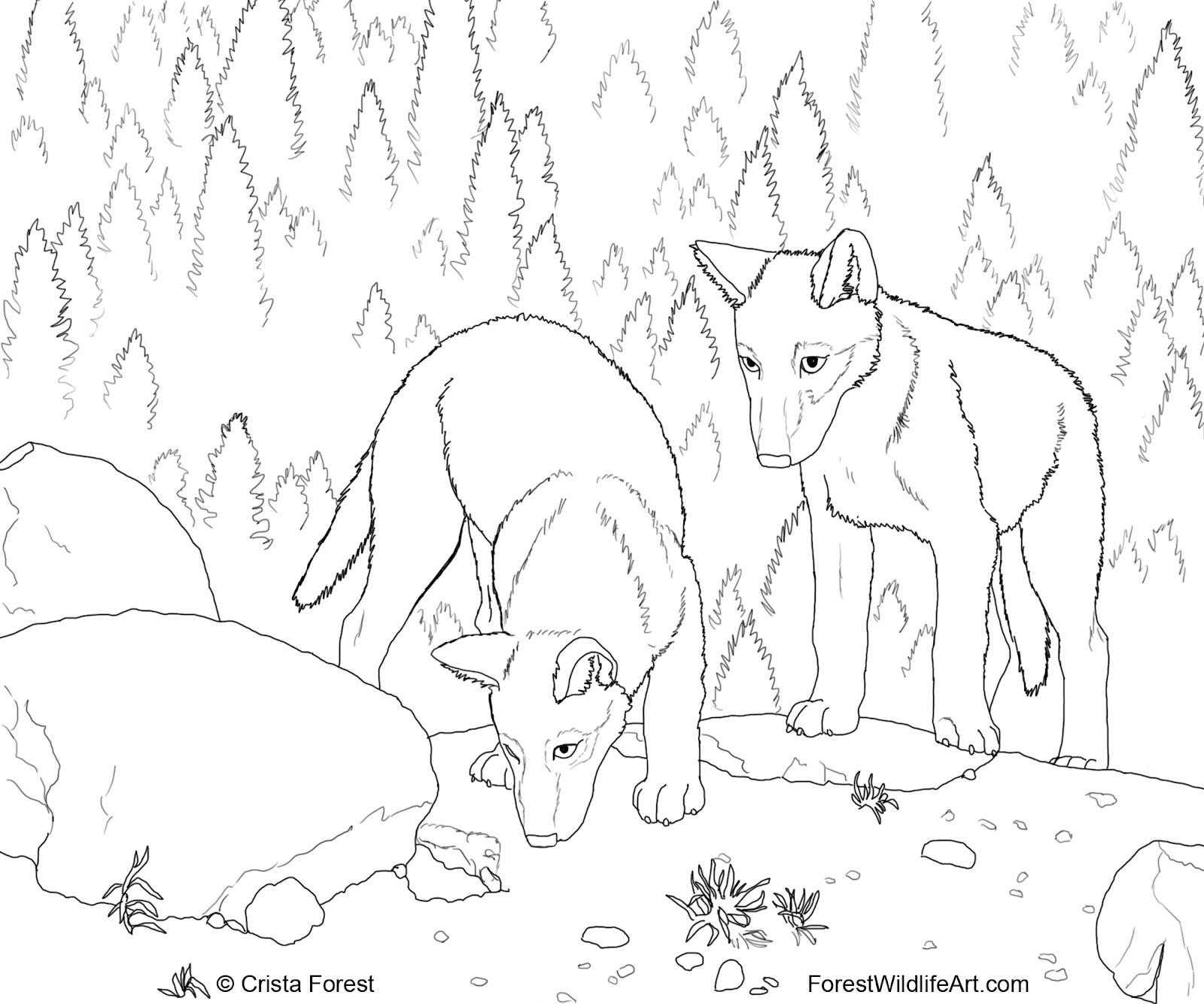 Wildlife coloring #2, Download drawings
