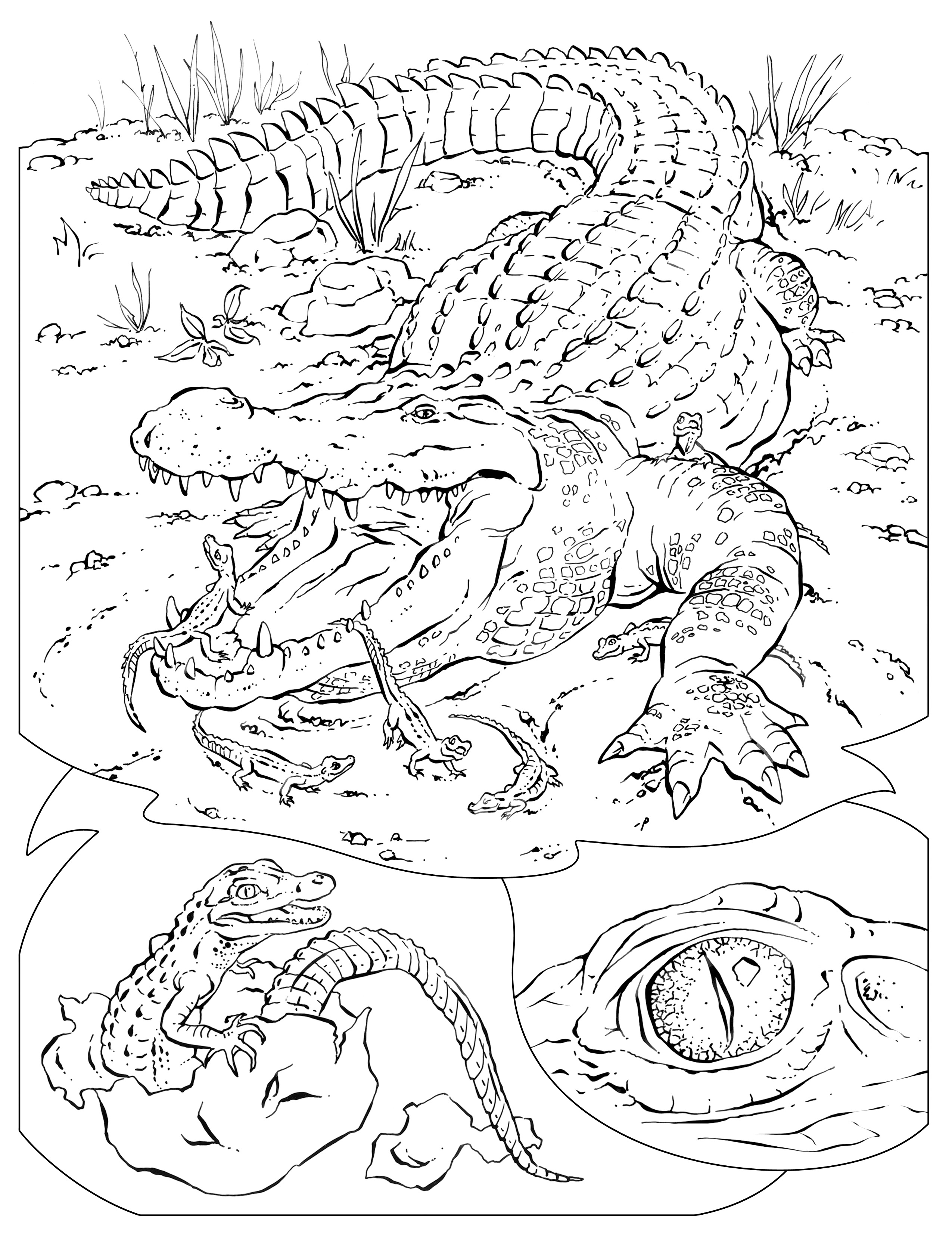Wildlife coloring #11, Download drawings
