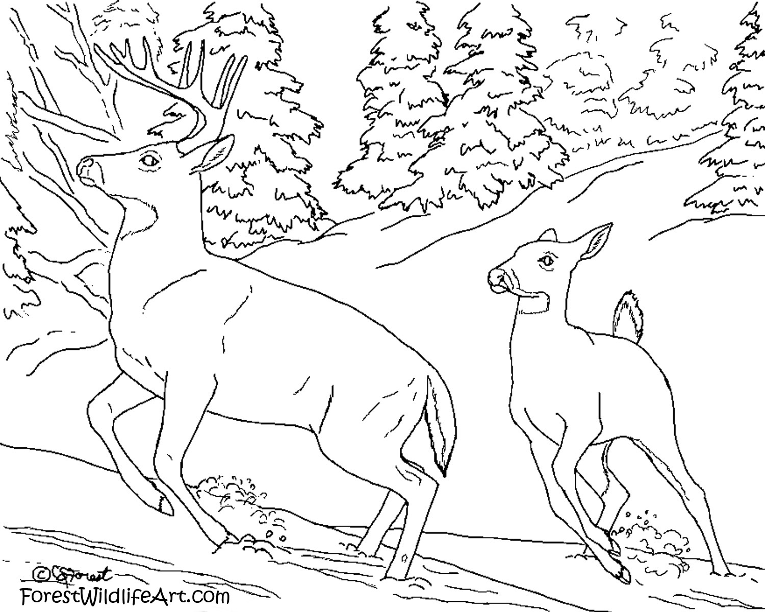 Wildlife coloring #15, Download drawings