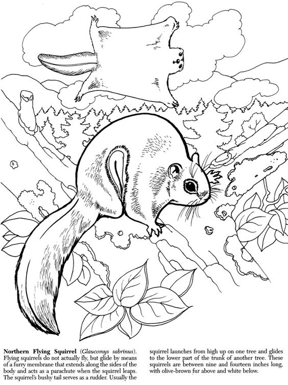 Wildlife coloring #9, Download drawings