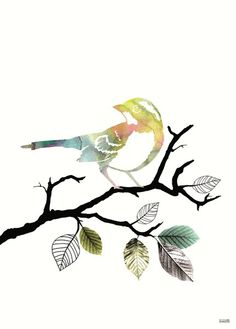 Willow Warbler clipart #5, Download drawings