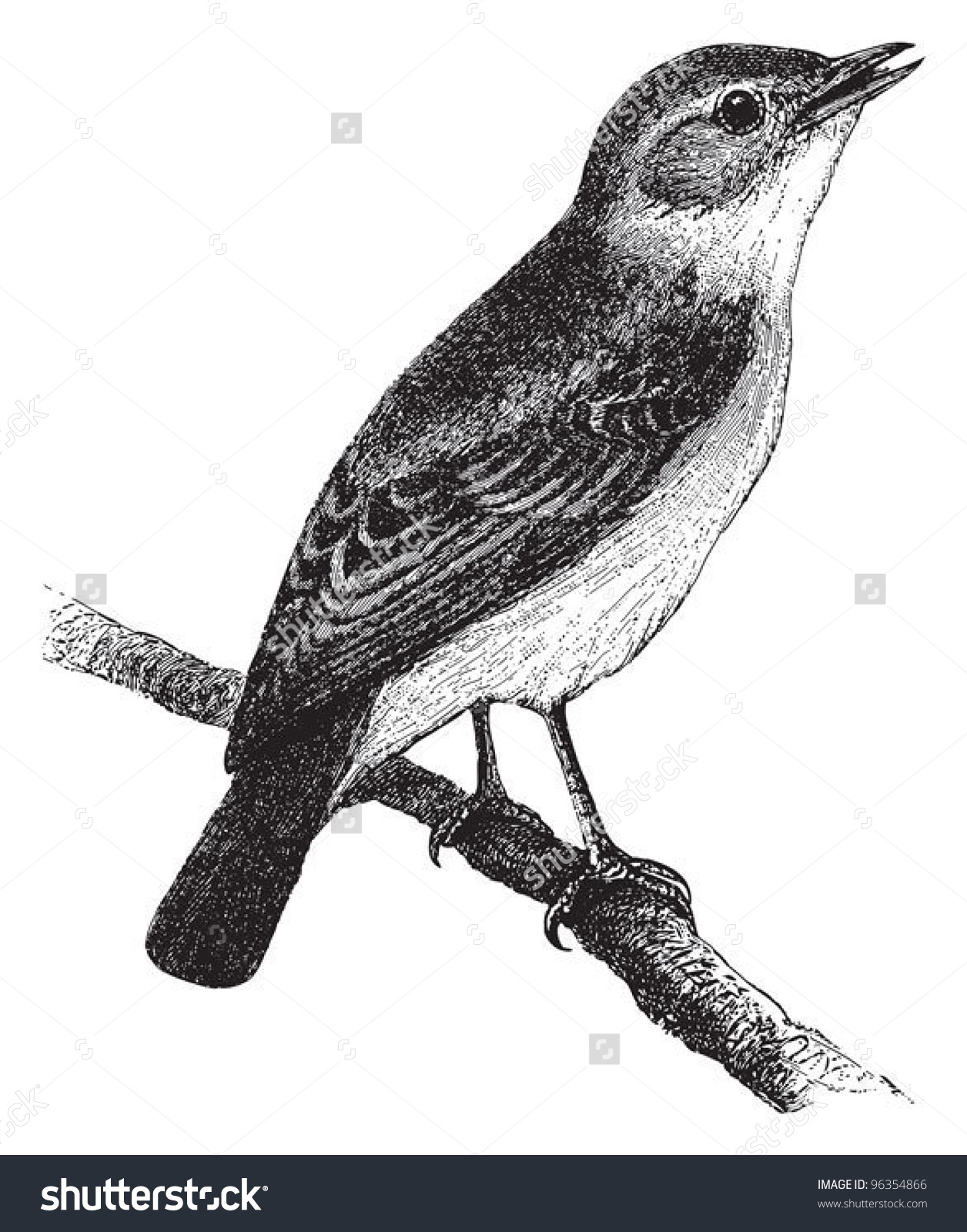 Willow Warbler clipart #6, Download drawings