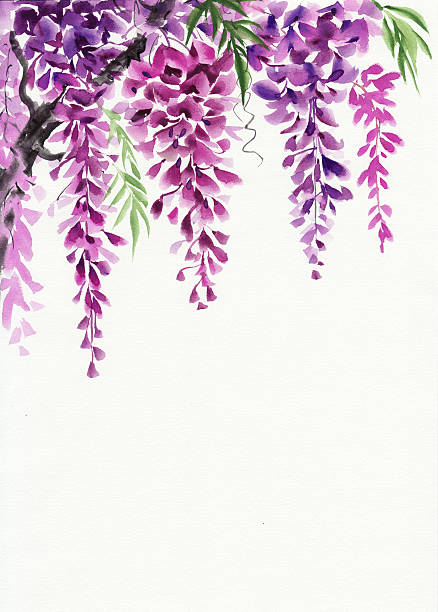 Wisteria clipart #1, Download drawings