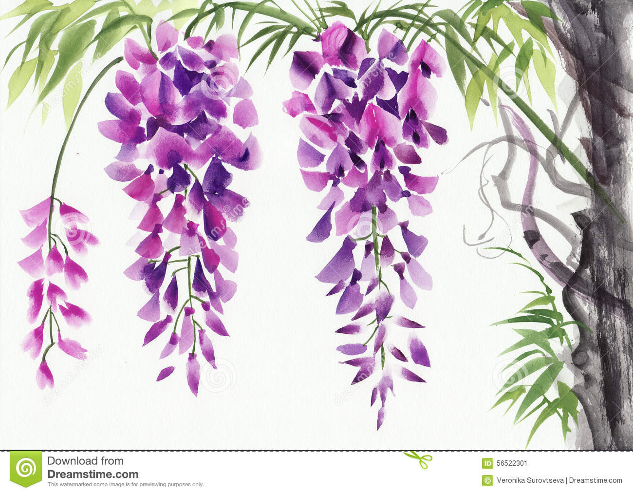 Wisteria clipart #11, Download drawings