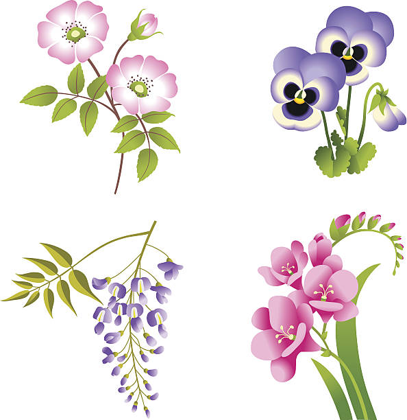 Wisteria clipart #16, Download drawings