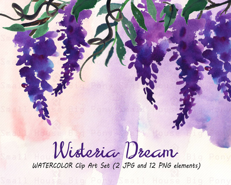 Wisteria clipart #20, Download drawings