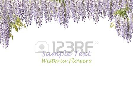 Wisteria clipart #2, Download drawings