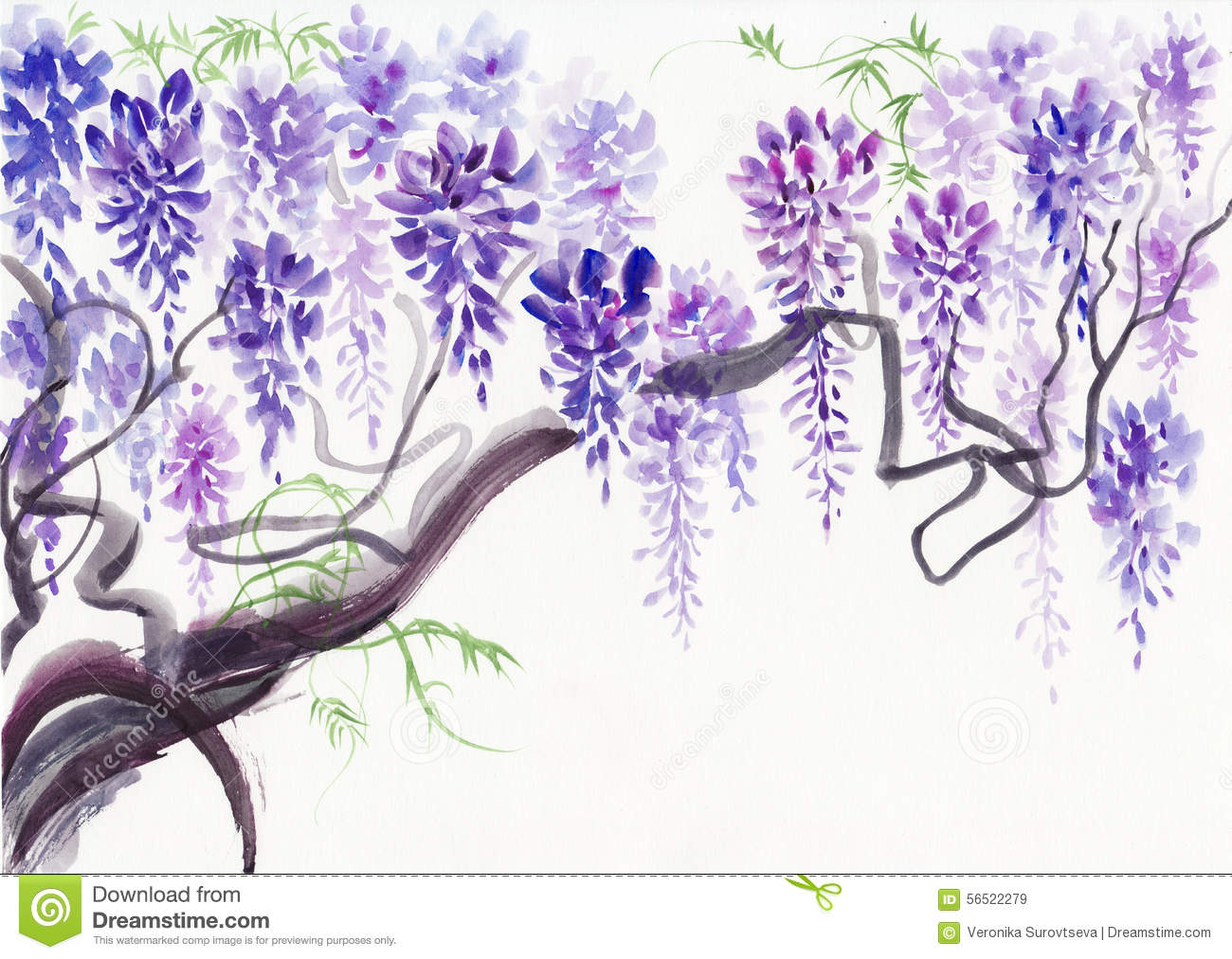 Wisteria clipart #13, Download drawings