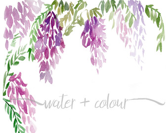 Wisteria clipart #9, Download drawings