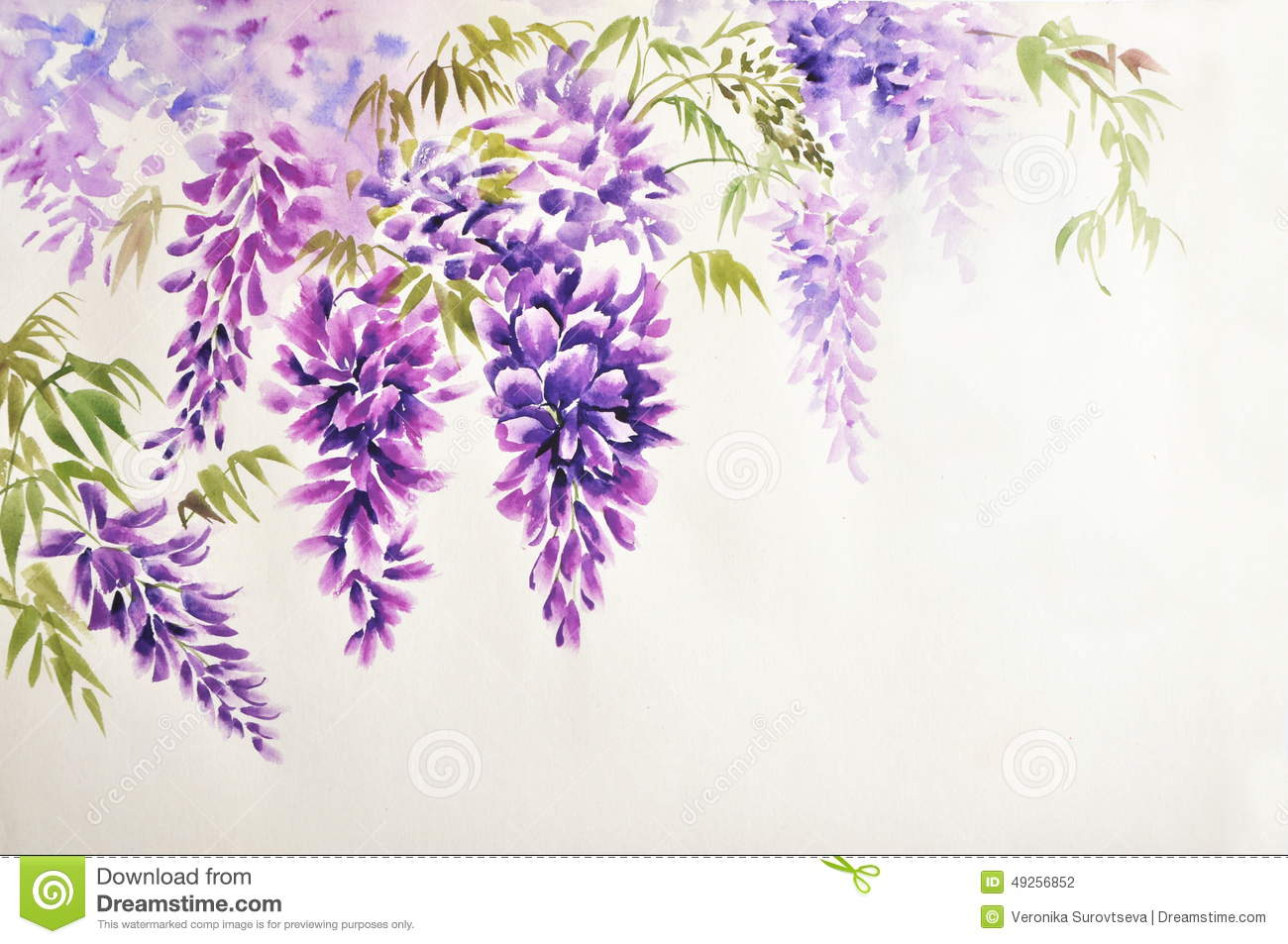 Wisteria clipart #4, Download drawings