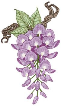Wisteria coloring #4, Download drawings