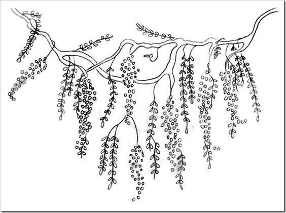 Wisteria coloring #16, Download drawings