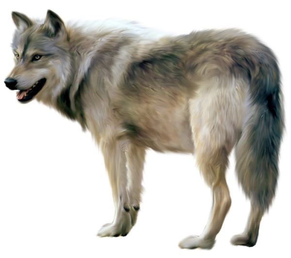 Wolf clipart #11, Download drawings