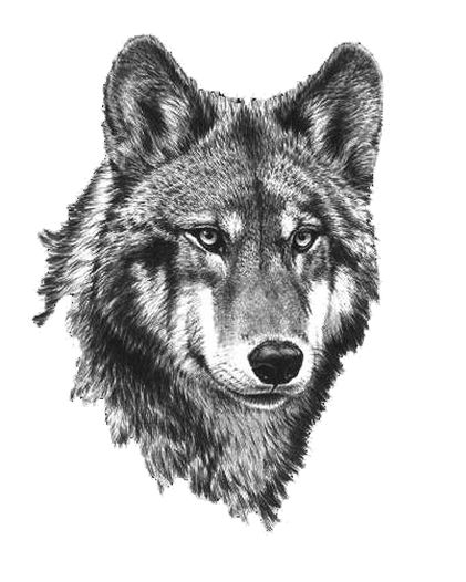 Wolf clipart #7, Download drawings