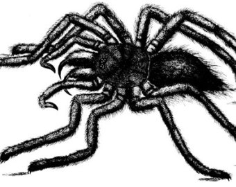 Wolf Spider clipart #15, Download drawings